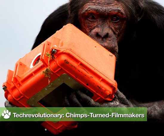 Techrevolutionary: Chimps-Turned-Filmmakers