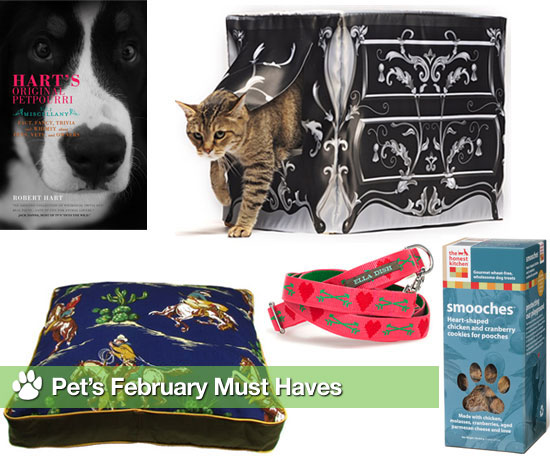 Pet's February Must Haves