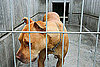 What&#039;s Your Take? Mandatory Animal Offenders Registry