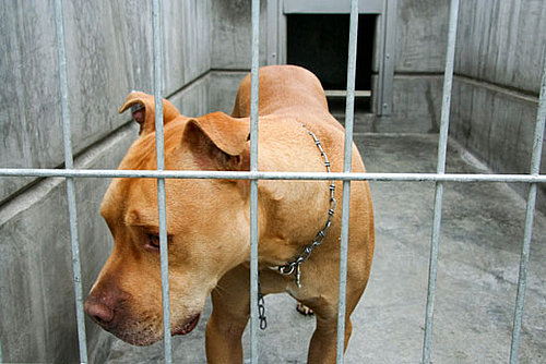 What's Your Take? Mandatory Animal Offenders Registry