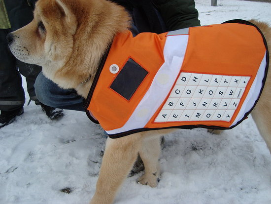 Tech-Enabled Dogs Can Bring Video Messages to Disaster Areas