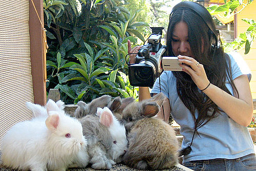 Hare-Raising Documentary Hops Into Competitive Bunny World