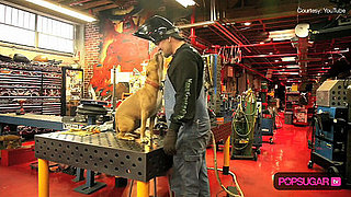 Sandra Bullock and Jesse James's Dog Cinnabun at the West Coast Choppers Shop