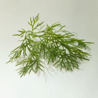 Herb Garden Quiz