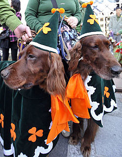 What Do You Know About Irish Setters?