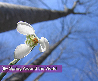 Spring Around the World