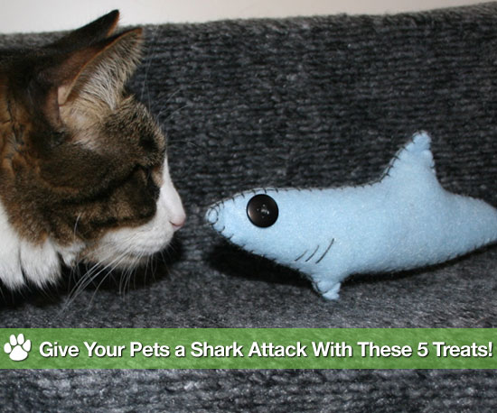 Give Your Pets a Shark Attack With These 5 Treats!