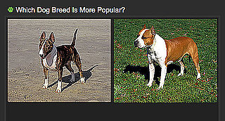 Do You Know Which Breed Is More Popular? 2010-04-02 04:00:41