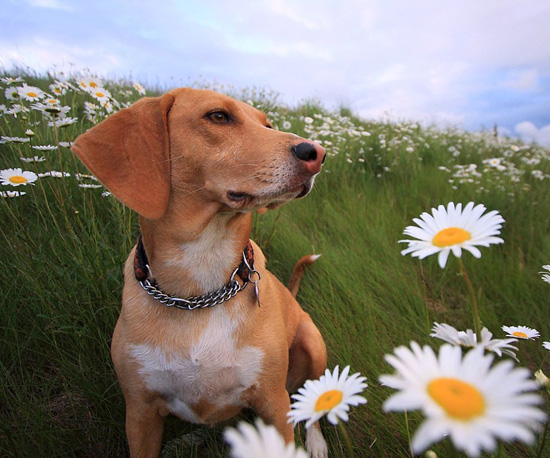Peep Pretty Pooches Posing With Petals