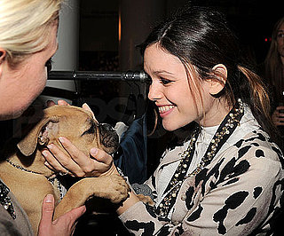 Slide Photo of Rachel Bilson and Puppy in New York