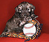 Kick Off Baseball Season With These Things For Dogs