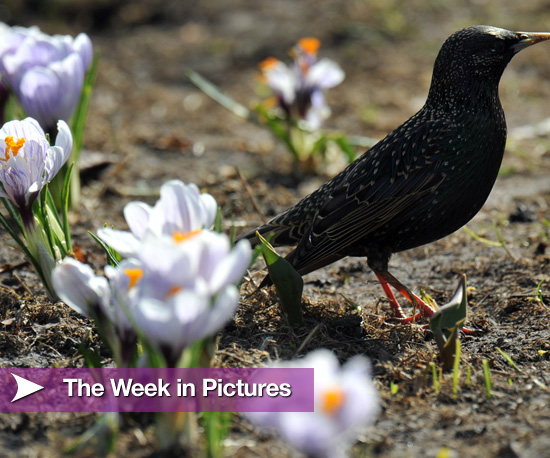 The Week in Pictures 2010-04-03 08:00:21
