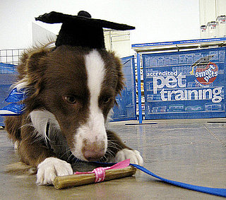 Should My Dog Go to Obedience School?