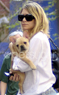 Ashley Olsen Gets a French Bulldog