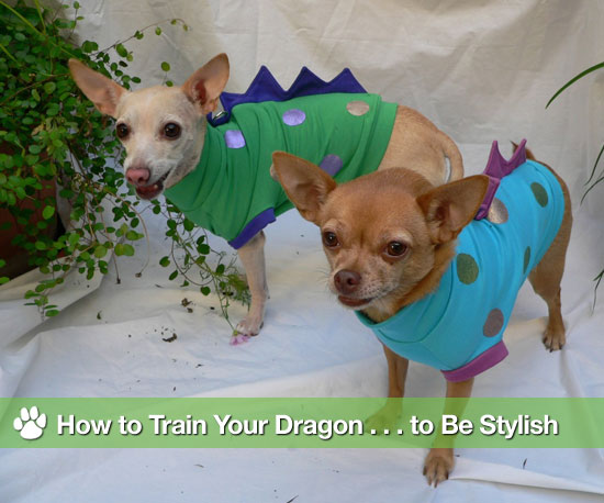 How to Train Your Dragon . . . to Be Stylish
