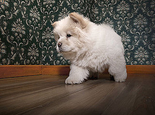 Carpet and Pet Stains Versus Hardwood Floor
