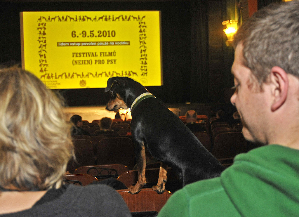 Could Your Dog Sit Through a Flick?