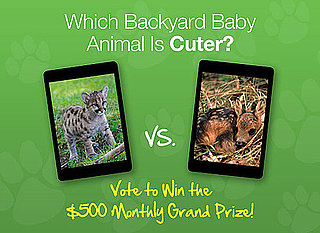 Pick the Cuter Backyard Baby in a Perfect Spring Faceoff!