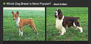 Do You Know Which Breed Is More Popular? 2010-05-22 04:00:00