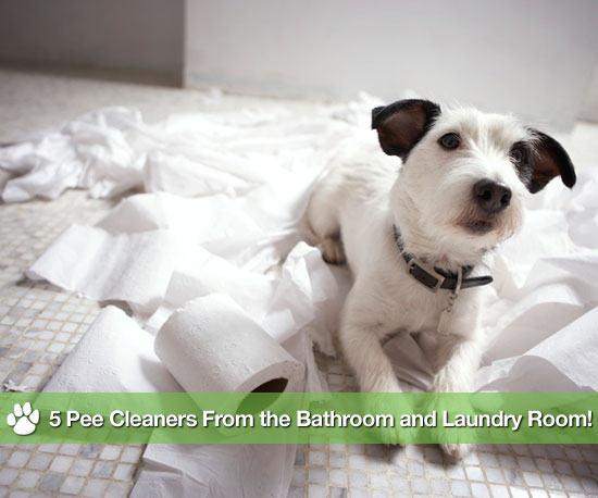 5 Pee Cleaners From the Bathroom and Laundry Room!