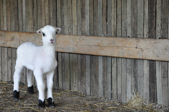 Springtime at the Ranch is Full of Cuteness