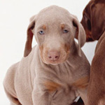 Facts About Dog Vaccinations