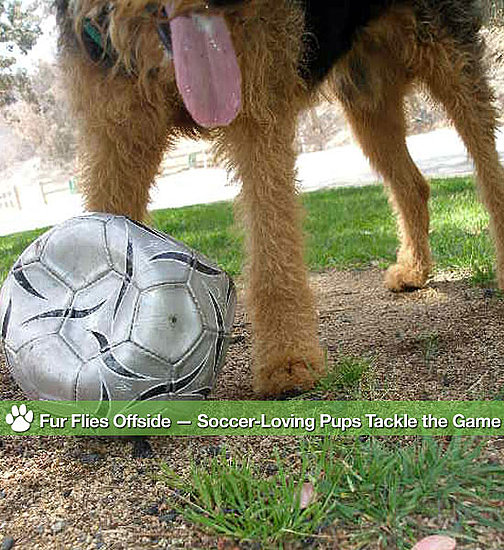 Fur Flies Offside — Soccer-Loving Pups Tackle the Game