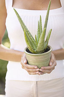 How to Use Aloe Vera For Sunburn 2010-06-29 13:00:52