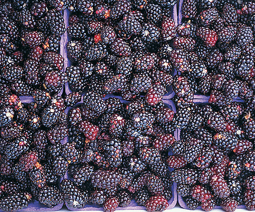 Nutritional Facts About Blackberries