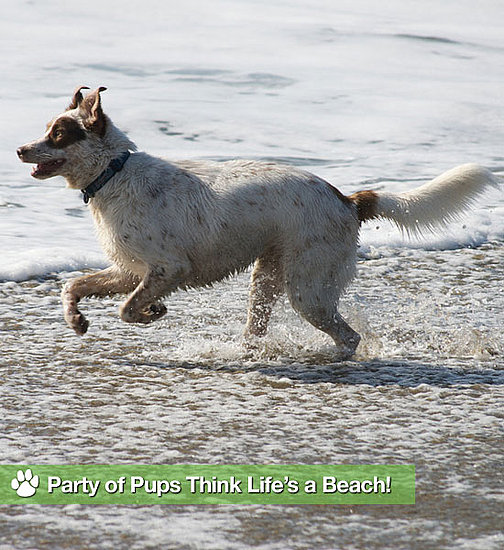Party of Pups Think Life's a Beach!