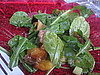 Grilled Peach Salad With Grapefruit Vinaigrette Recipe