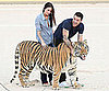 Slide Picture of Brian Austin Green and Megan Fox Visiting Tigers at an Animal Sanctuary
