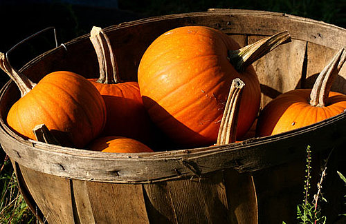 Nutritional Value of Pumpkins