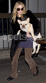 How Big Is Ashley Olsen's French Bulldog and Is This Dog Too Big to Fly on a Plane?