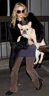 Pictures of Ashley Olsen and Her French Bulldog