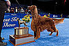 Who Won the National Dog Show in 2010 and What Is the Dog Show on Thanksgiving Called and Clooney the Irish Setter