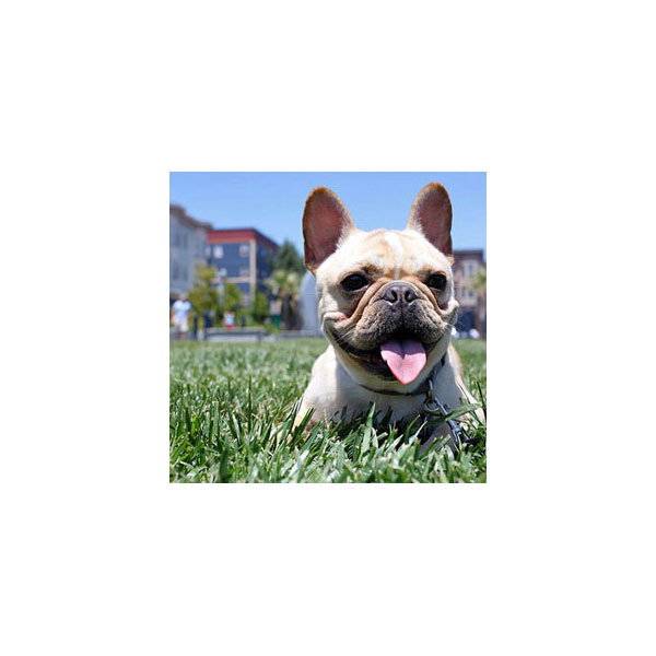 Set Your Camera to Sport or Action For Pet Pics