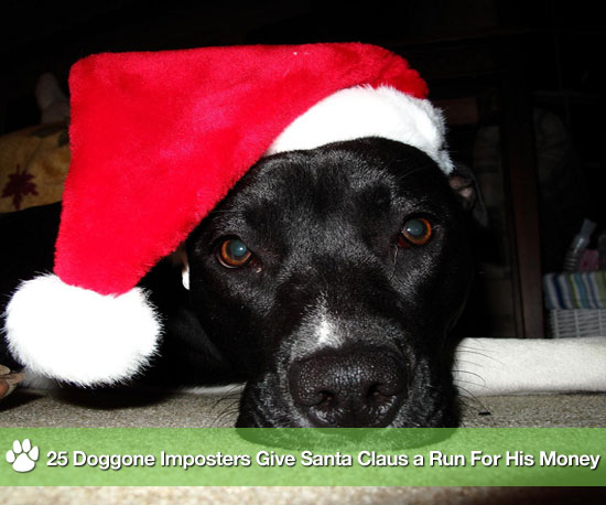25 Doggone Imposters Give Santa Claus a Run For His Money