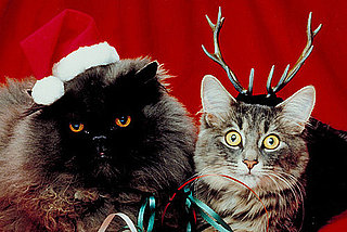 Pictures of Cats in Costume For Christmas