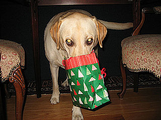 My Dog Is Bad and My Cat Is Bad — Do They Need Presents?