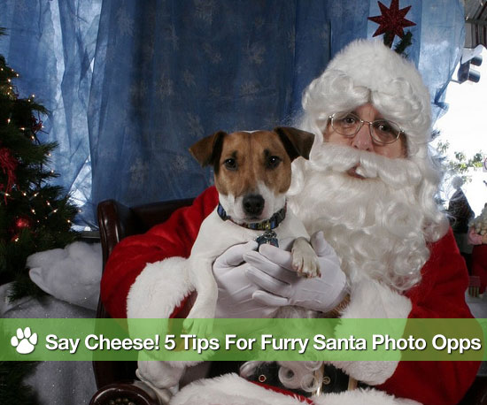 Say Cheese! 5 Tips For Furry Santa Photo Opps