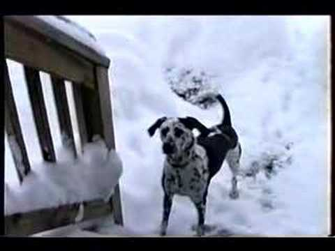 Video of Dog in Snowbank