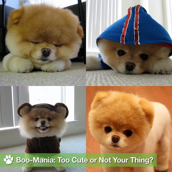 Boo-Mania: Too Cute or Not Your Thing?