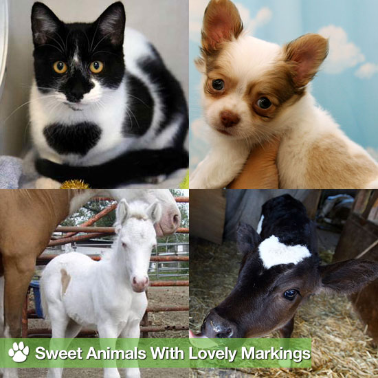 Be Still My Heart: Sweet Animals With Lovely Markings