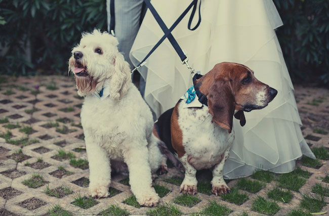 Since this couple met through their dogs, they thought it only fitting to include the pups in the theme design and ceremony!  Photo by EP Love