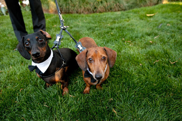 Suit up! This pair of pooches sure did!  Photo by John Solano Photography