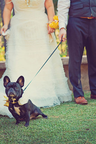 Love the cute yellow bow on this couple's pup!  Photo by Our Labor of Love