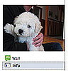 Pets on Facebook and Twitter