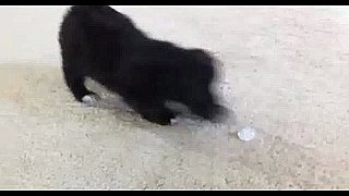 Video of Puppy Playing With Ice Cube