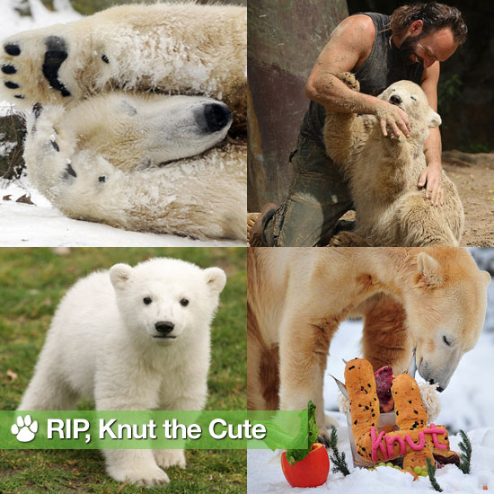 Goodbye, Knut: Our Favorite Polar Bear Passes Away